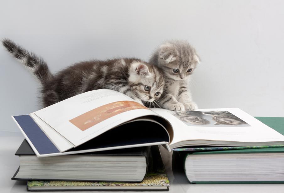 goals reading